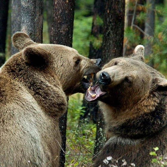 Зимние куртки с медведями