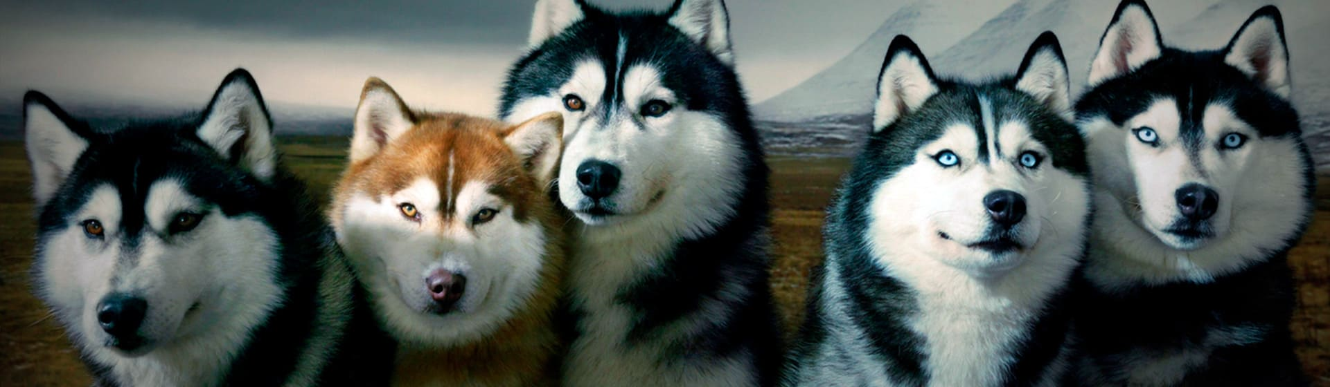 Собаки - Женские толстовки