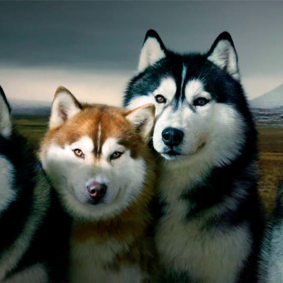 Костюмы с собаками