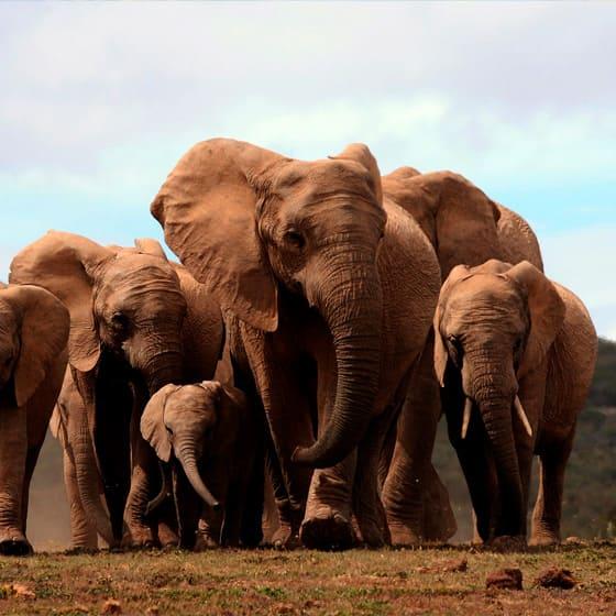 Детские юбки со слонами