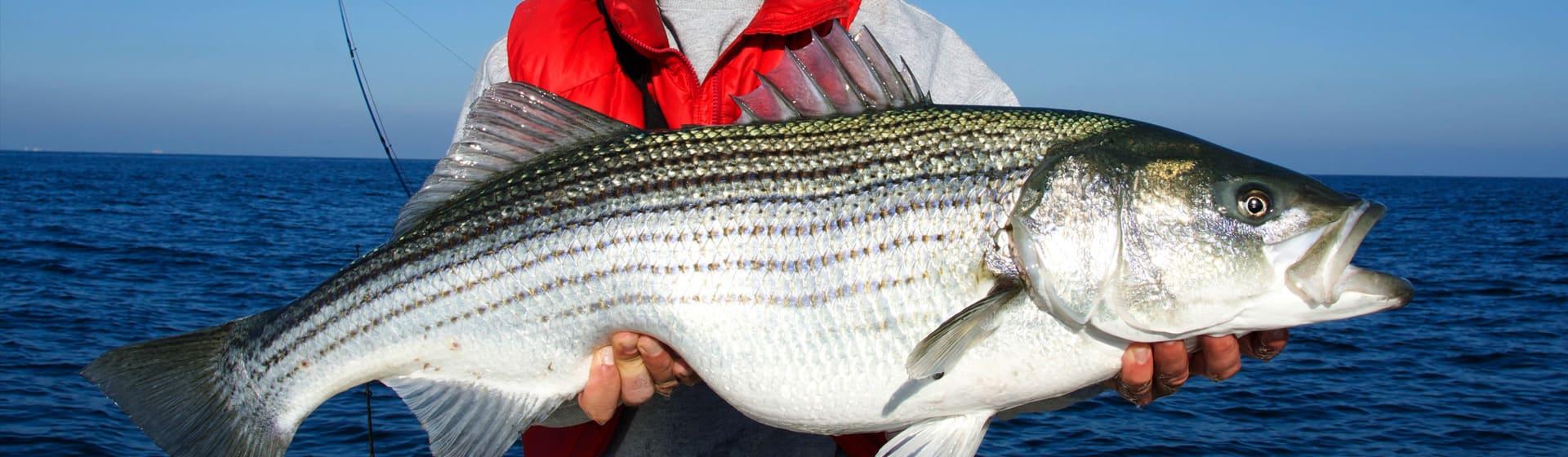 Рыбалка - Детские шорты