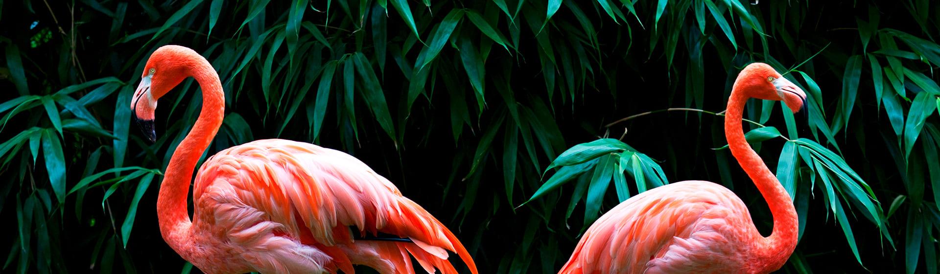 Фламинго - Мерч и одежда с атрибутикой