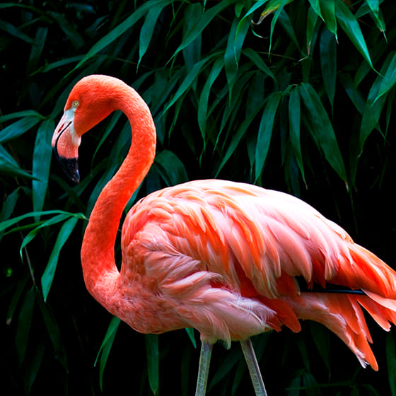 Женские свитшоты с фламинго