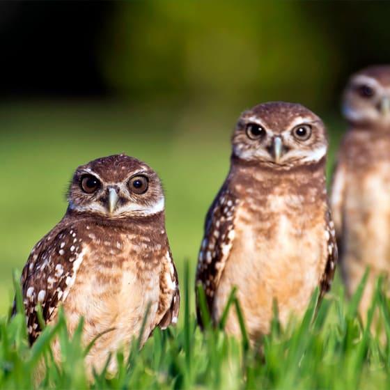 Женские толстовки с совами
