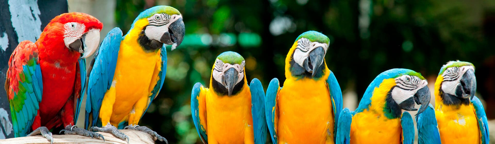 Попугаи - Мерч и одежда с атрибутикой