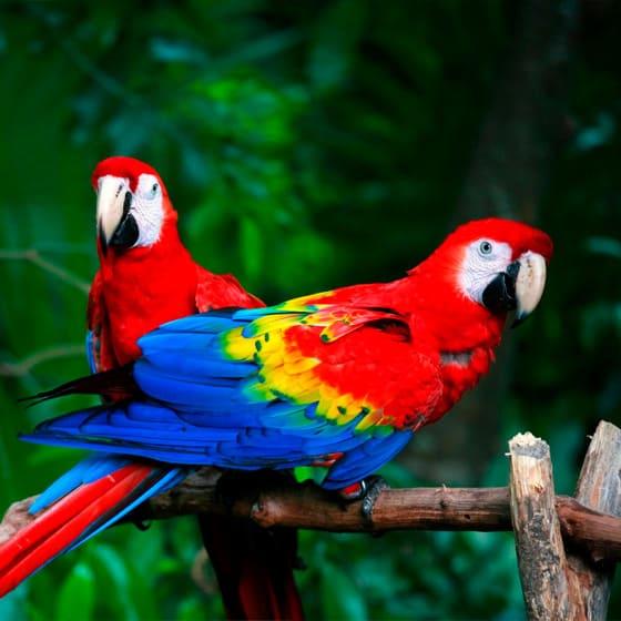 Кепки-снепбек с попугаями