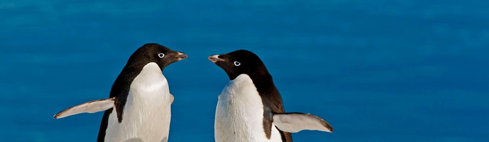 Пингвины - Мерч и одежда с атрибутикой