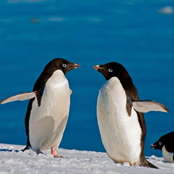 Одежда с пингвинами