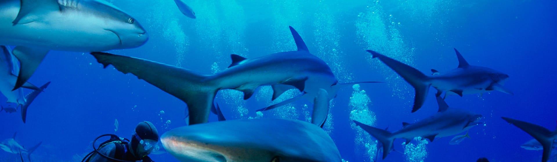 Акулы - Женские свитшоты