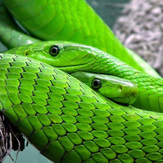 Женские свитшоты со змеями